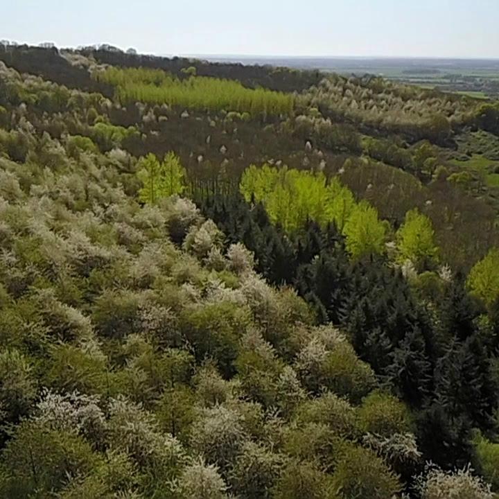 bois du manoir les marronniers, début du printemps