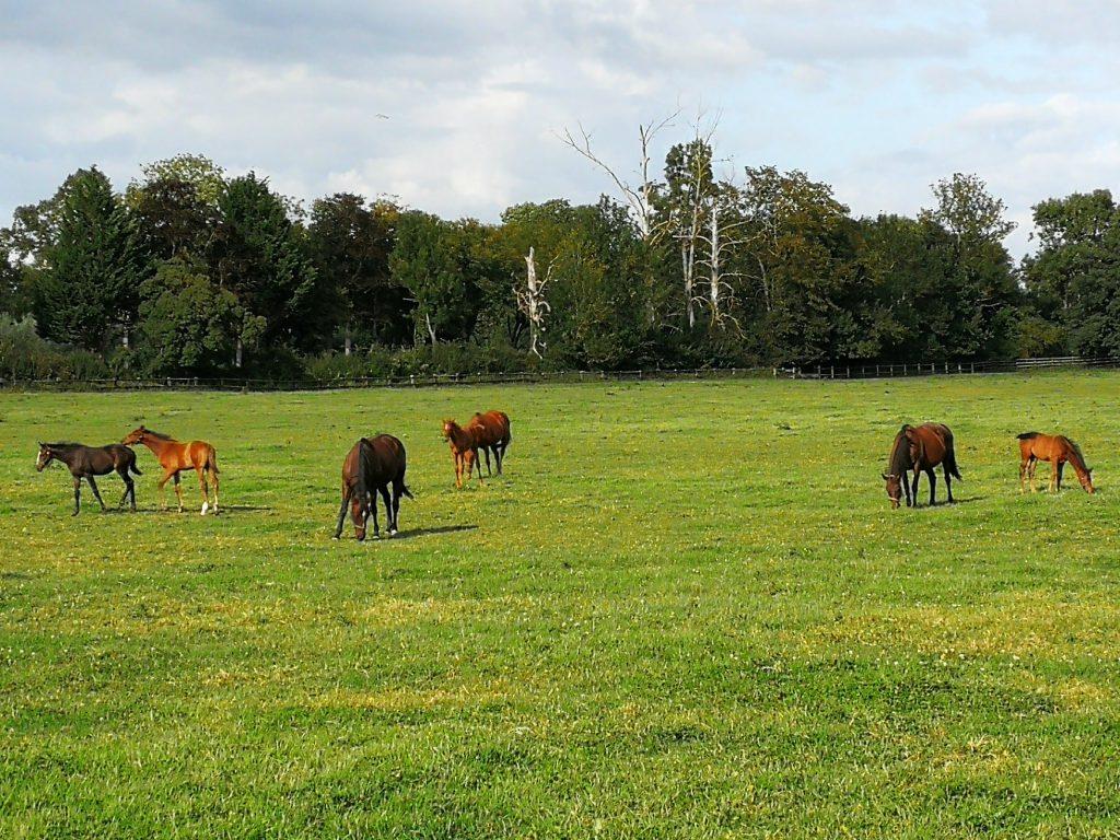 balade des haras, chevaux et manoir de Pontfol