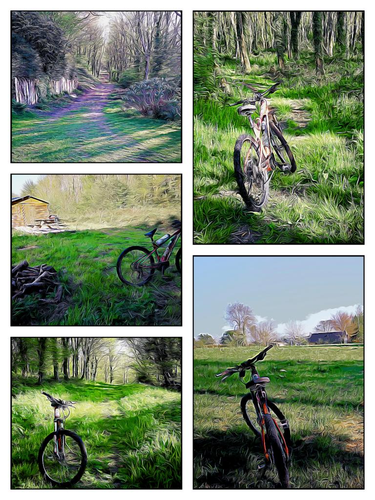 randonnée vélo dans le bois
