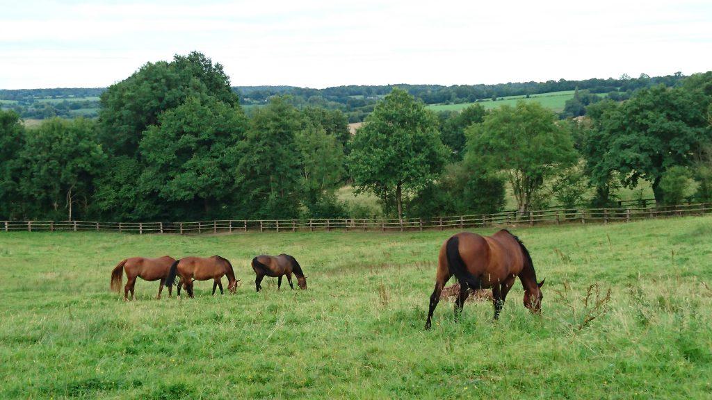 chevaux d'un hara près du manoir des marronniers